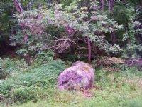 Acreage Near Jefferson Nat'l Forest : Troutdale : Grayson County : Virginia