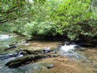 4ac On Trout Stream In Aska