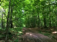 5 Wooded Acres