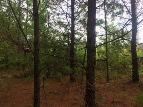 8.98 Acres - Hwy 6 S. Lake Drive : Lexington : South Carolina