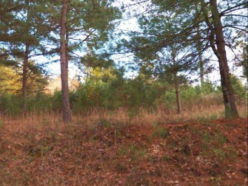 Woodland Acres Lot : Ellijay : Gilmer County : Georgia