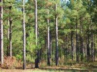 4 Acres Wooded Ez Owner Financing