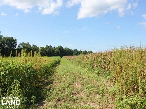 Jamestown Homesite Or Mini Farm : Jamestown : Berkeley County : South Carolina