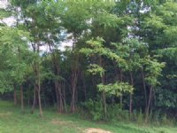10.63+/- Acres Adjacent To State Pk