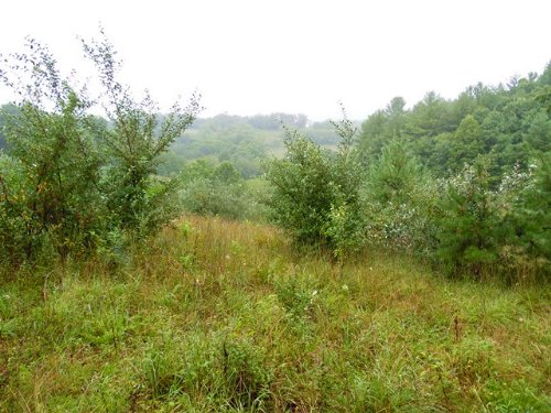 Beautiful Secluded Homesite : Independence : Grayson County : Virginia