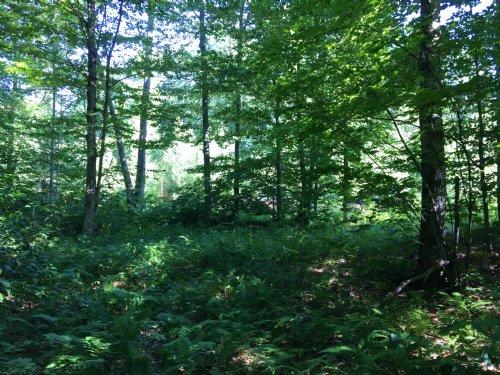Fisher Trail Camp Site : Amboy : Oswego County : New York