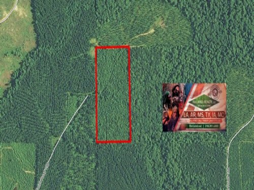 20 Ac - Timberland With Hunting : Sikes : Winn Parish : Louisiana