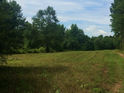 11+/- Acres W/paved Road Frontage : Banks : Pike County : Alabama