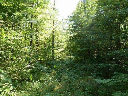 Mls 160265 - Little Ten Ln : Lac Du Flambeau : Vilas County : Wisconsin