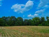 18.5 Acre Mini-farm