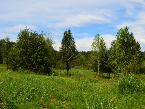 17.6 Acres Spartanburg's District 5 : Wellford : Spartanburg County : South Carolina