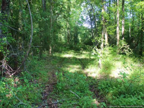 13.2± Acres : Madison : Mississippi