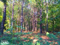 Upper Bethune Recreational Tract : Bethune : Kershaw County : South Carolina
