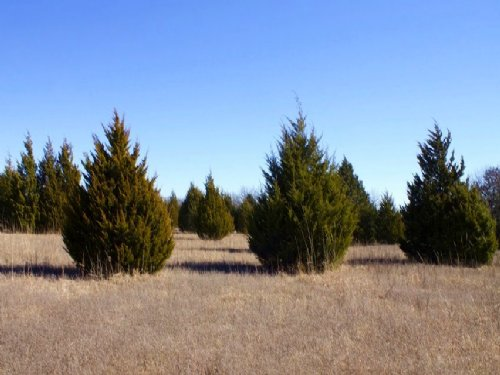 10.47 Acres Montgomery Ranch, Pond : Ardmore : Love County : Oklahoma