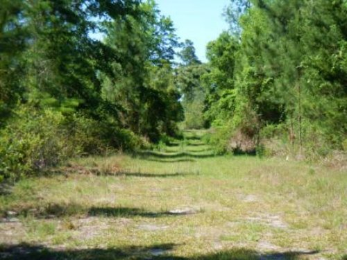Partially Cleared 4.82 Acres Of Agr : Palatka : Putnam County : Florida