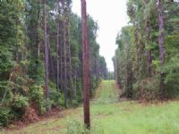 15.00 Acres Hunting Land, Timber