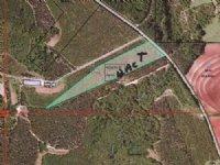 12 Acres Made Of Longleaf Pines : Banks : Pike County : Alabama