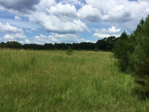 13± Acres : Utica : Hinds County : Mississippi