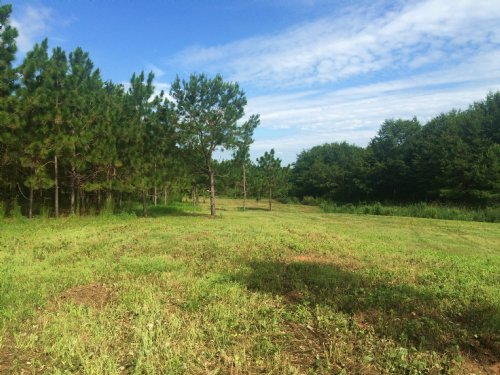 11 Acres : Banks : Pike County : Alabama