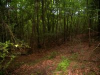 9.00 Acres Hunting Land