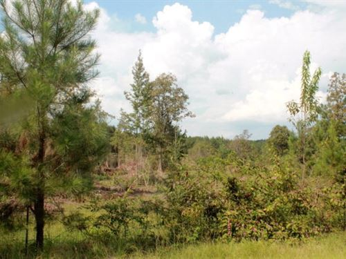 Land For Sale, Tangipahoa Parish : Kentwood : Tangipahoa Parish : Louisiana