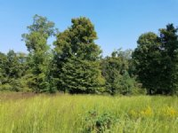 1.66 Acres Near Ky Lake : Big Sandy : Benton County : Tennessee