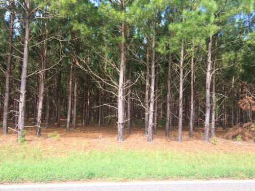 6 Acres With A Little Of Everything : Banks : Pike County : Alabama
