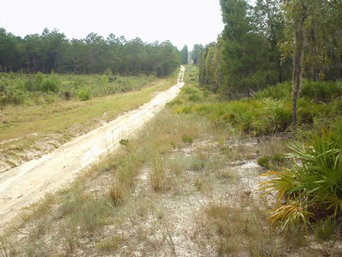 Square 9.34 Ac - High And Dry : Archer : Alachua County : Florida