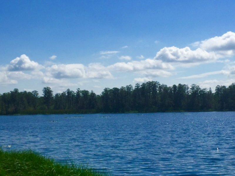 Lakefront Acreage Sale : Groveland : Lake County : Florida