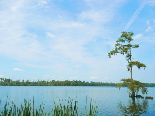 Coastal Foreclosure Sale : Edenton : Chowan County : North Carolina