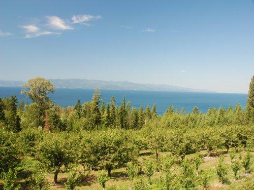 Lake To Sky Cherry Orchard : Polson : Lake County : Montana