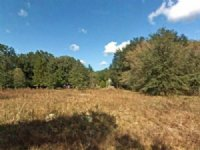 0.25 Acre In Dunnellon