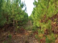 17.90 Acres Recreation Land, Timber