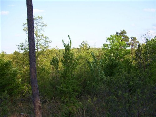 5 Acre Pine Mountain Ranch : Red Oak : Latimer County : Oklahoma