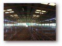 20.00 Acres Cattle Farm Land, Ranch