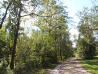 14.1 Acres - Wooded And Peaceful : Earleton : Alachua County : Florida