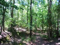 15Ac. Timberland/Recreational Tract