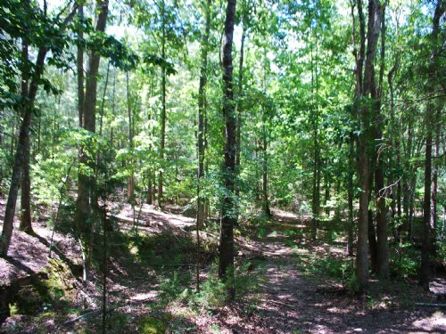 15 Ac Timberland/Recreational Tract : Union : South Carolina