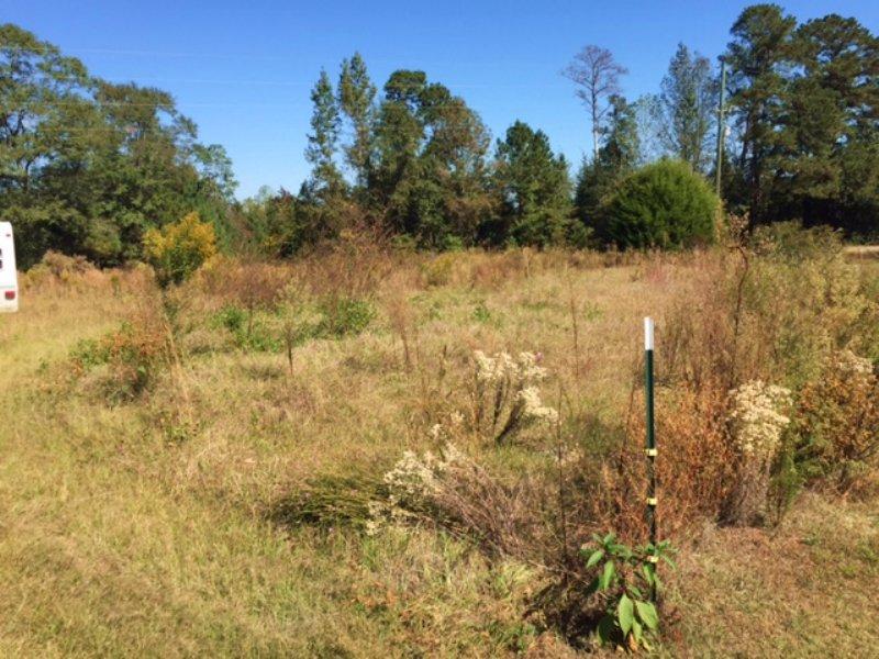 Bryan Taylor Rd Tract : Brantley : Crenshaw County : Alabama