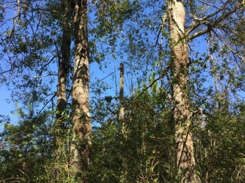 3.7 Acres In Harrison County : Saucier : Harrison County : Mississippi