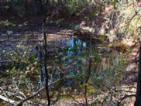 9.88 Acres On Lake Bowen With Pond