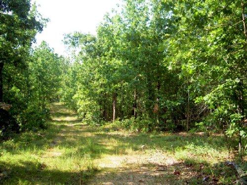 12 Acre Property For Off Grid Livin : Alton : Oregon County : Missouri