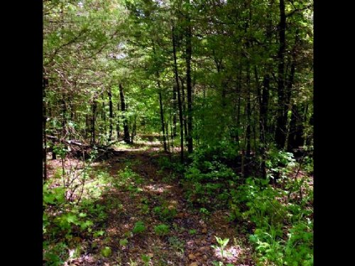 Nice Wooded Lot With Electric Avail : Mountain Home : Baxter County : Arkansas