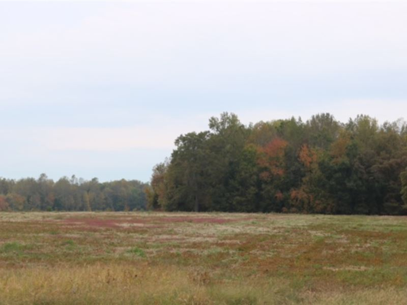 Bell Acres, 1.55 Acre Lot : Morrison : Coffee County : Tennessee