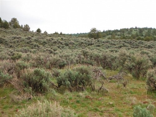 20 Acres Moon Valley Ranch : Madeline : Lassen County : California