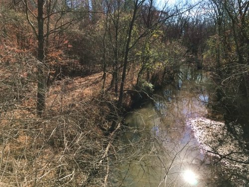 Lot 1, 5.005 +/- Acres : Fairmount : Bartow County : Georgia