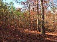 Lot 4, 5.002 +/- Acres : Fairmount : Bartow County : Georgia
