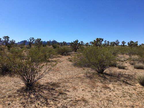 Absolute Desert Paradise Has Power : Dolan Springs : Mohave County : Arizona