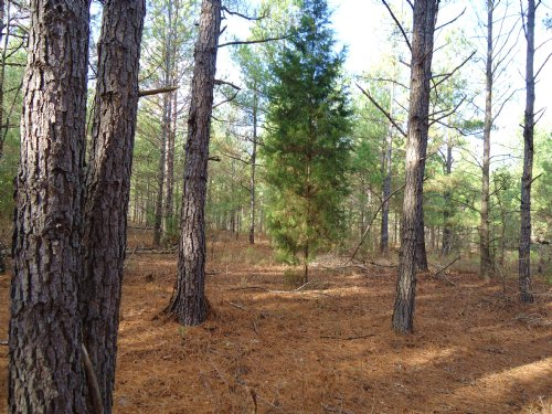 6 Acres, $212/Month : Bartow : Washington County : Georgia