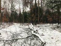 Maple Meadows